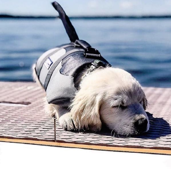 Paddle Boarding Dog